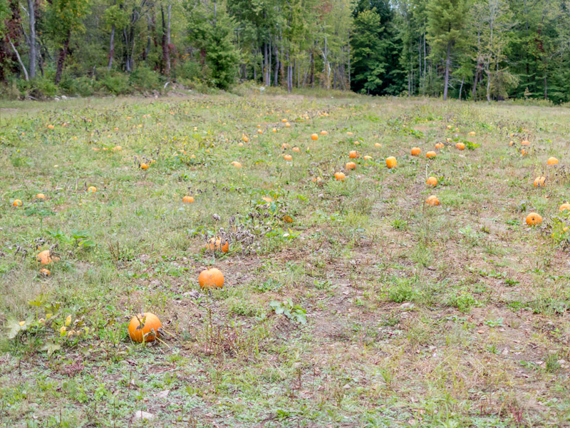 Pumpkin Patch at Stony Hill Acres